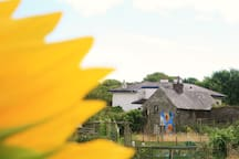 Cottage with sunflower mural:)