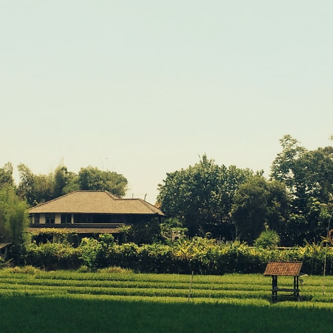 View of the house over the paddy fields