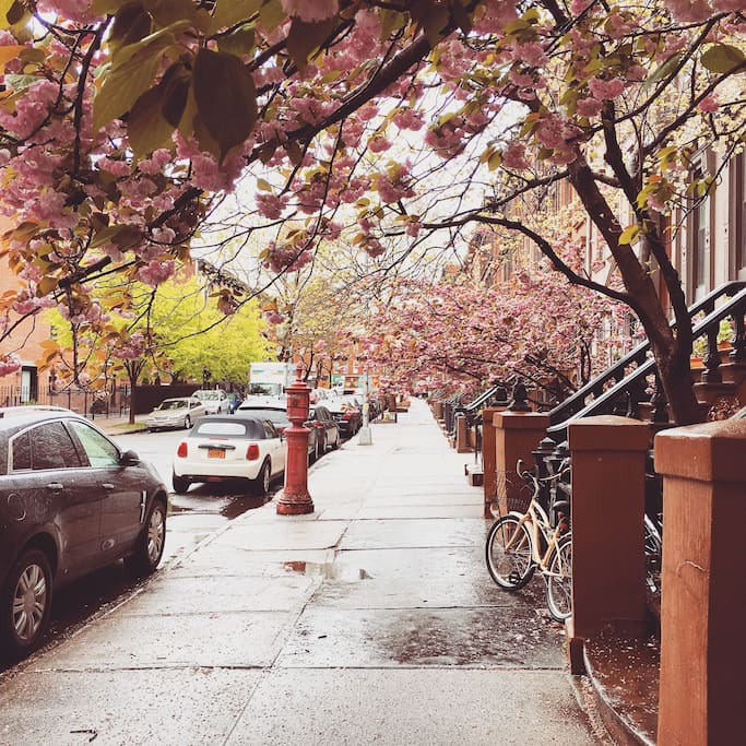 In the spring, see the cherry blossom bloom right on our front stoop.