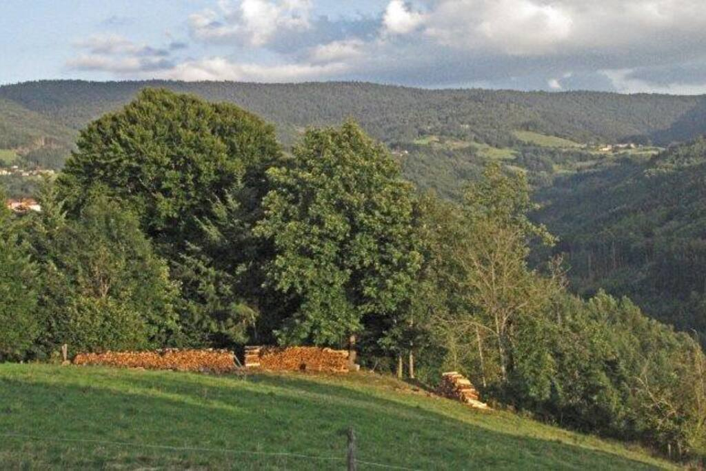 Views to the Monts de Forez (1300mtrs)