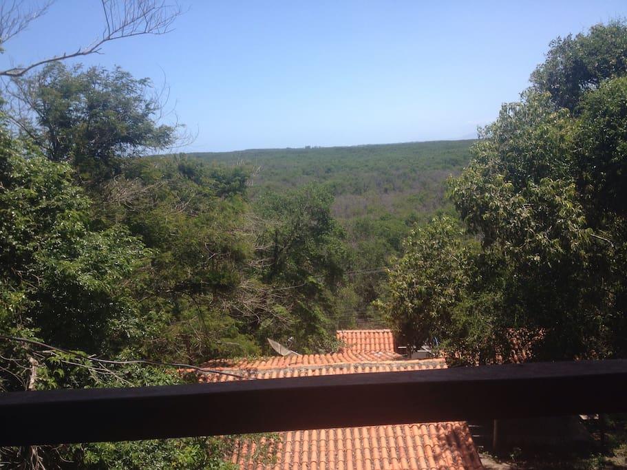 Vista do segundo andar para a floresta do mangue