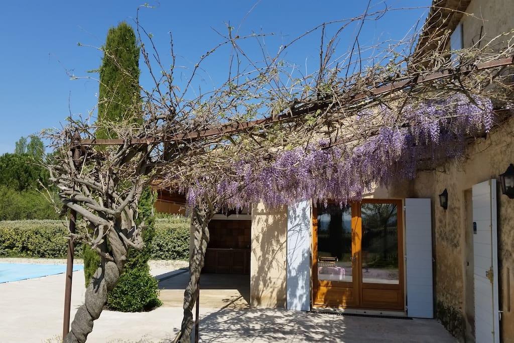 Treille devant Cuisine/Arbor front the Kitchen (La Piscine)