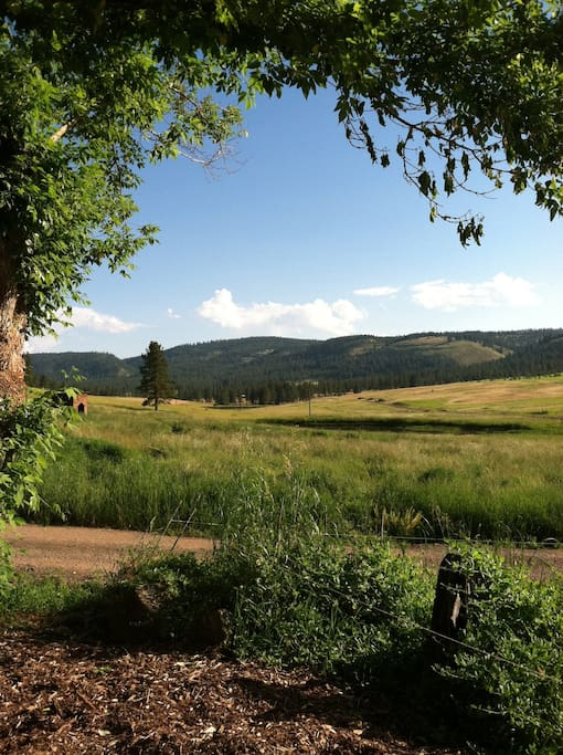 See elk from the front porch