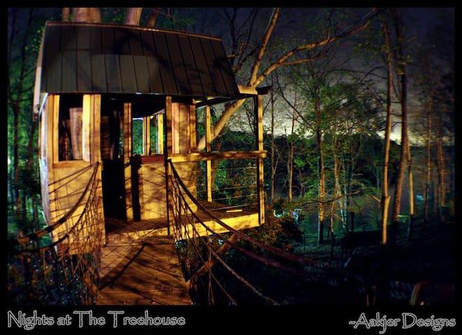 Treetop Beech Dreams - Seneca