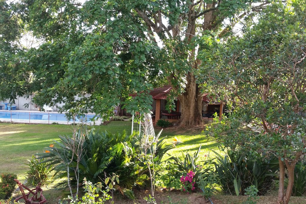 Hermoso árbol nos cobija.