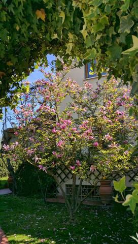 Nonna's House - Figline e Incisa Valdarno - Appartement