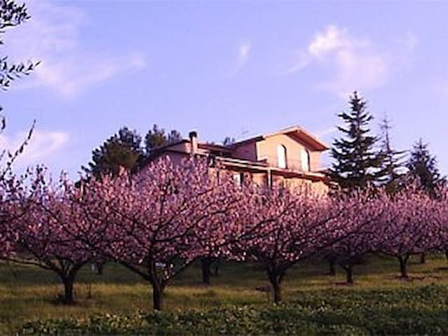 Podere Costantino - Alba apartment - Heavenly view