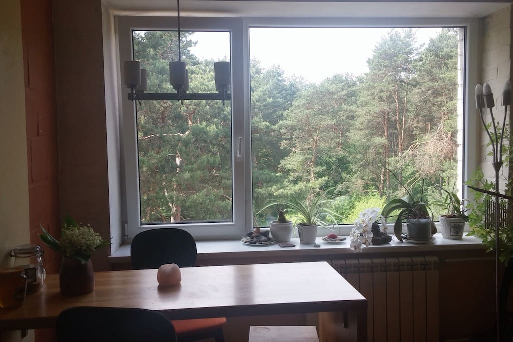 Lovely pine forest all over the living room windows!..