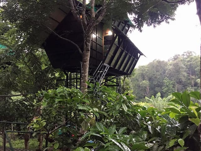 Tree House with Jungle view