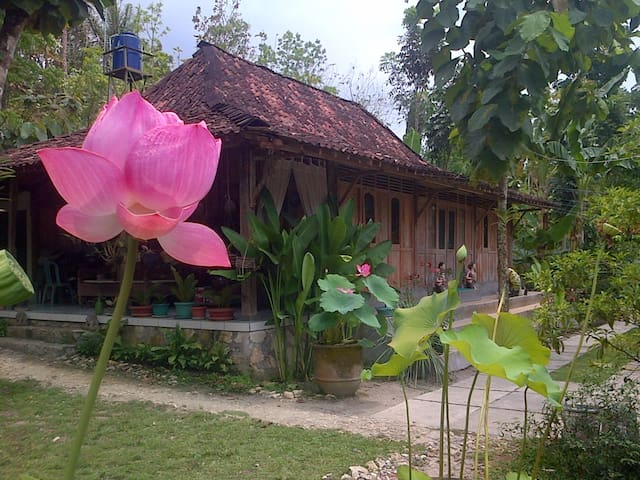 RUMAH LIMAS JOGJA : Javanese Wooden House - Yogyakarta - Bed & Breakfast
