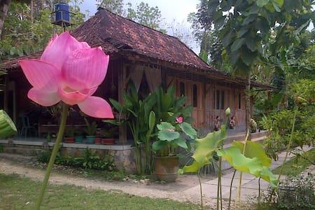 RUMAH LIMAS JOGJA : Javanese Wooden House