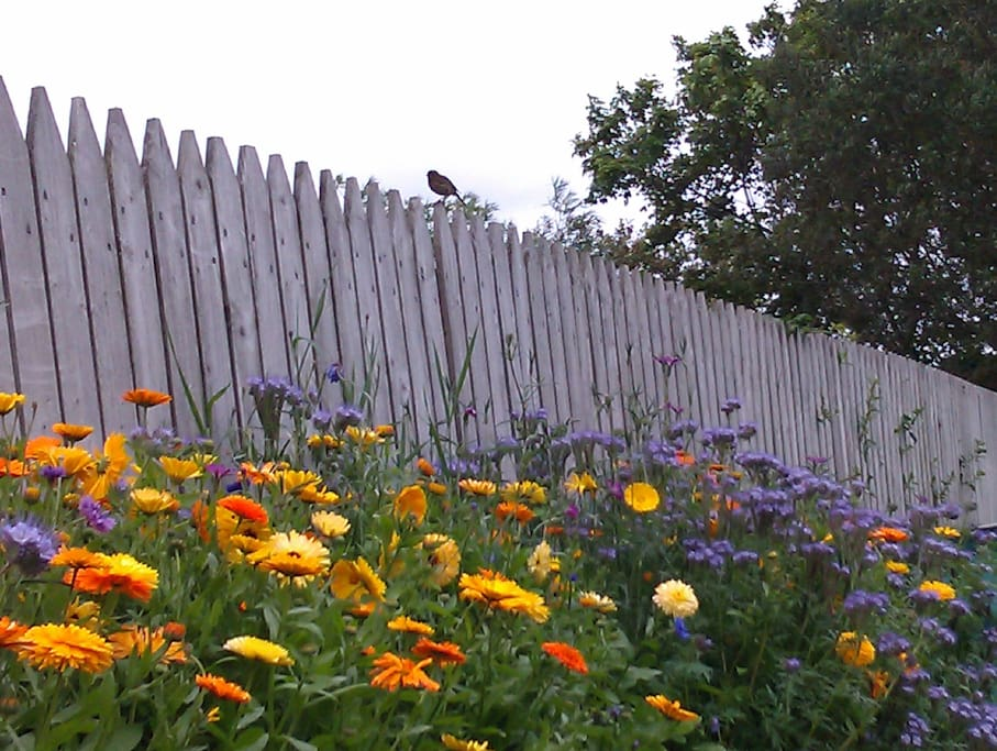 Rockpool House Garden in Bloom.