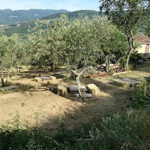 Tra olivi e bosco a un passo dalla città