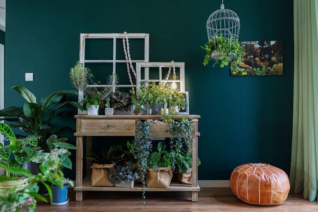 用奇异绿植做出的植物墙,抽屉和鸟笼里长出叶子来。