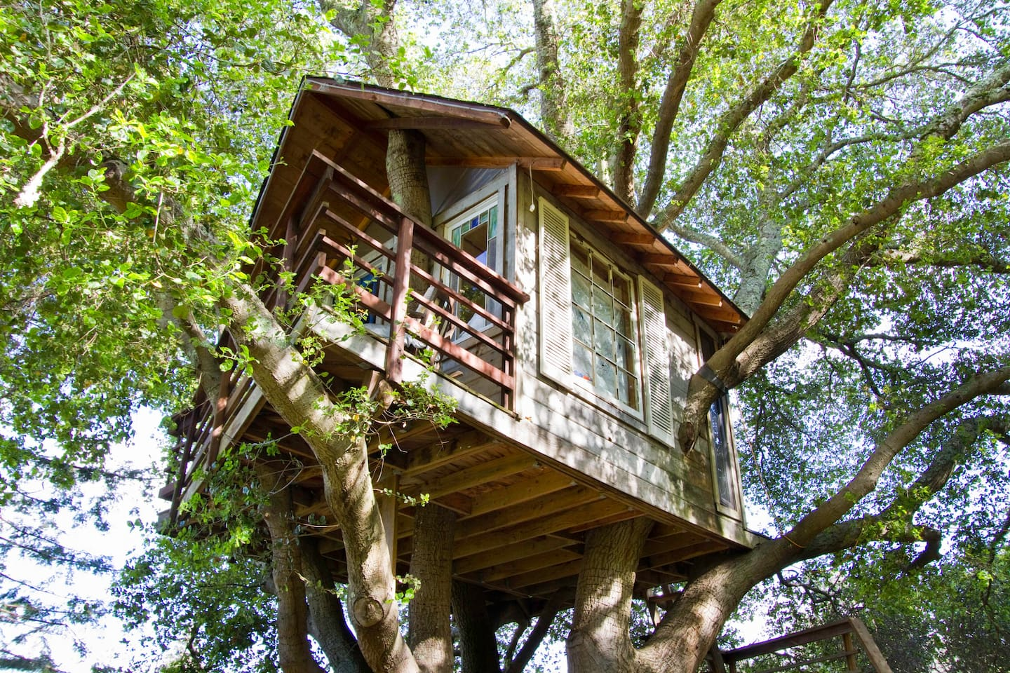 treehouse above san francisco bay treehouses for rent in burlingame california united states