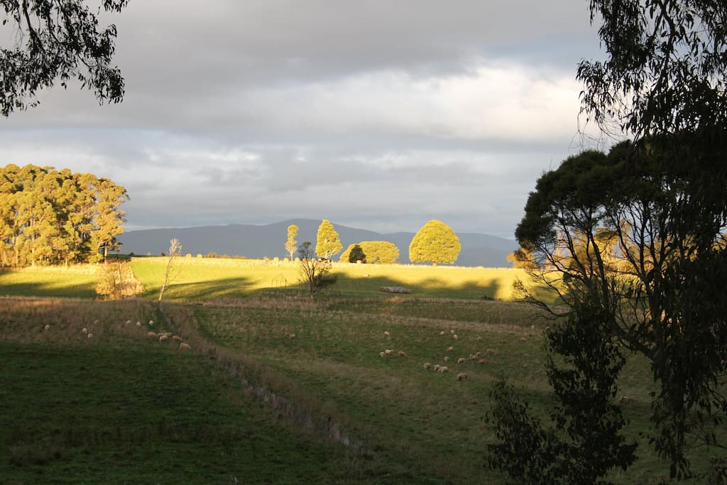 Our view....across farmland to Mt St Leonards. Enjoy this view from our decks, open plan living and kitchen, and even the ensuite!