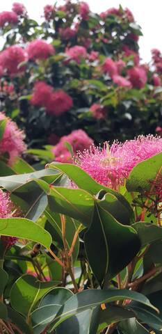 St.Kilda Botanical view apartment (2.0)