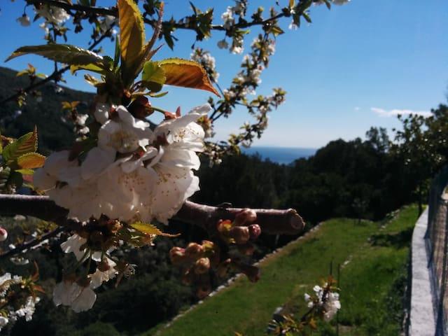 Bilocale al Limone, in villa vista mare.
