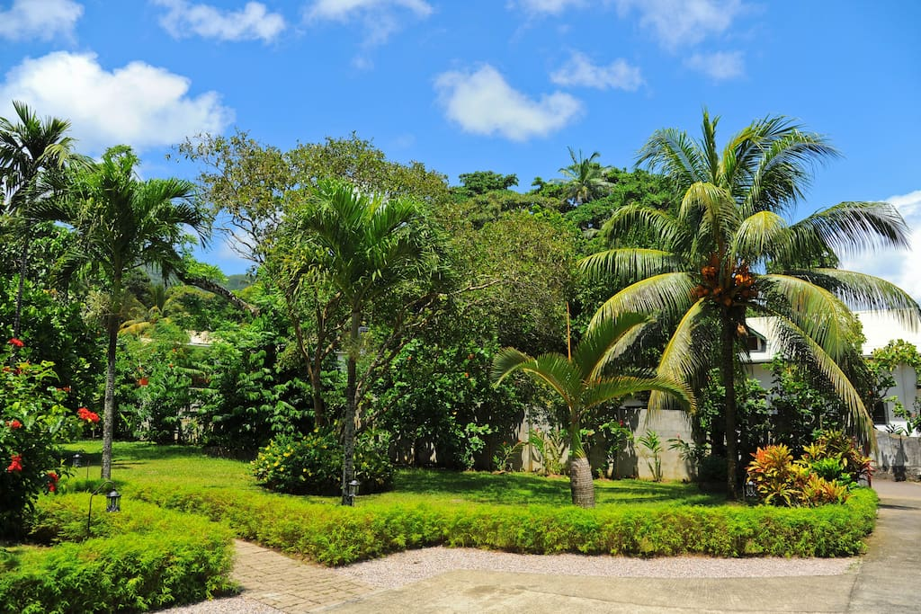 Beautiful garden with exotic plants and fruit trees