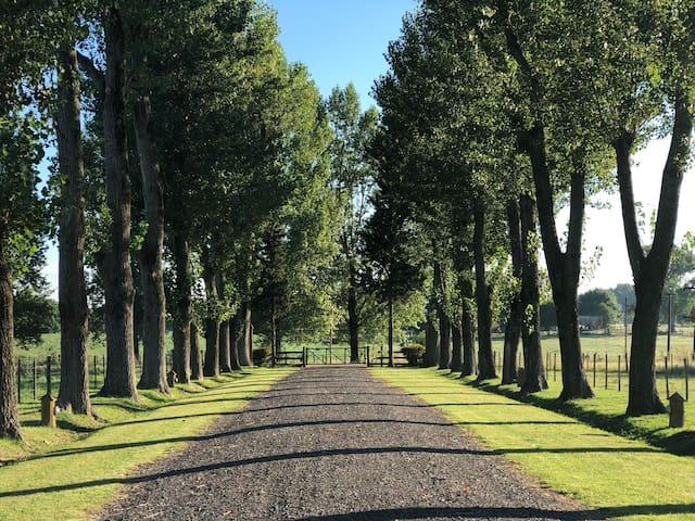 Campo Victoria