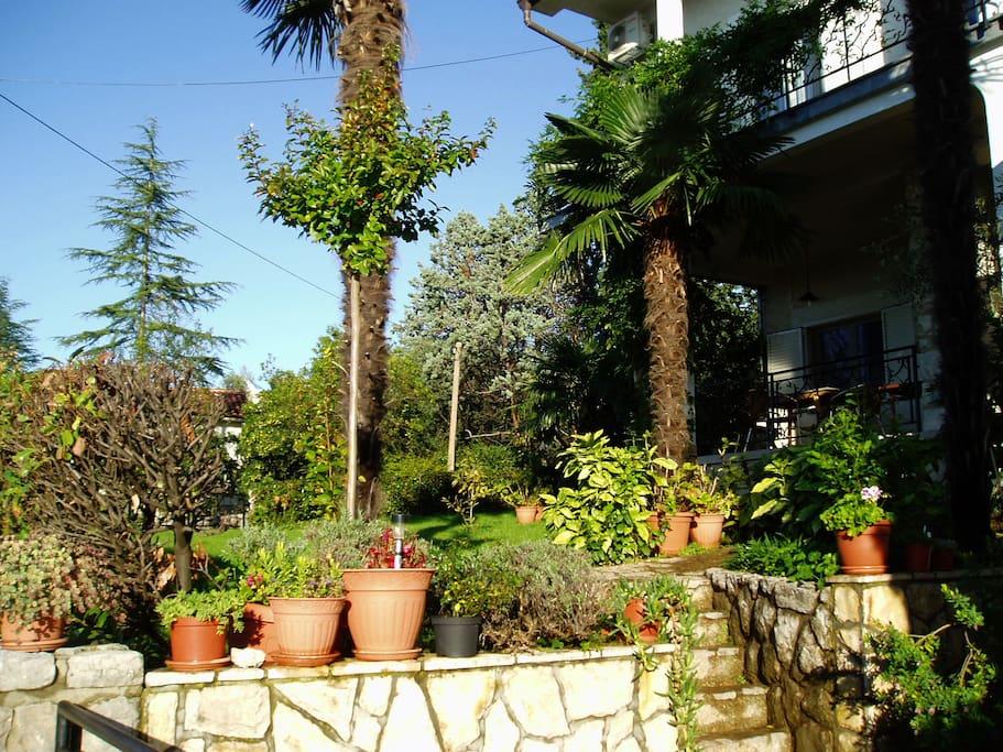 Blick in Garten
