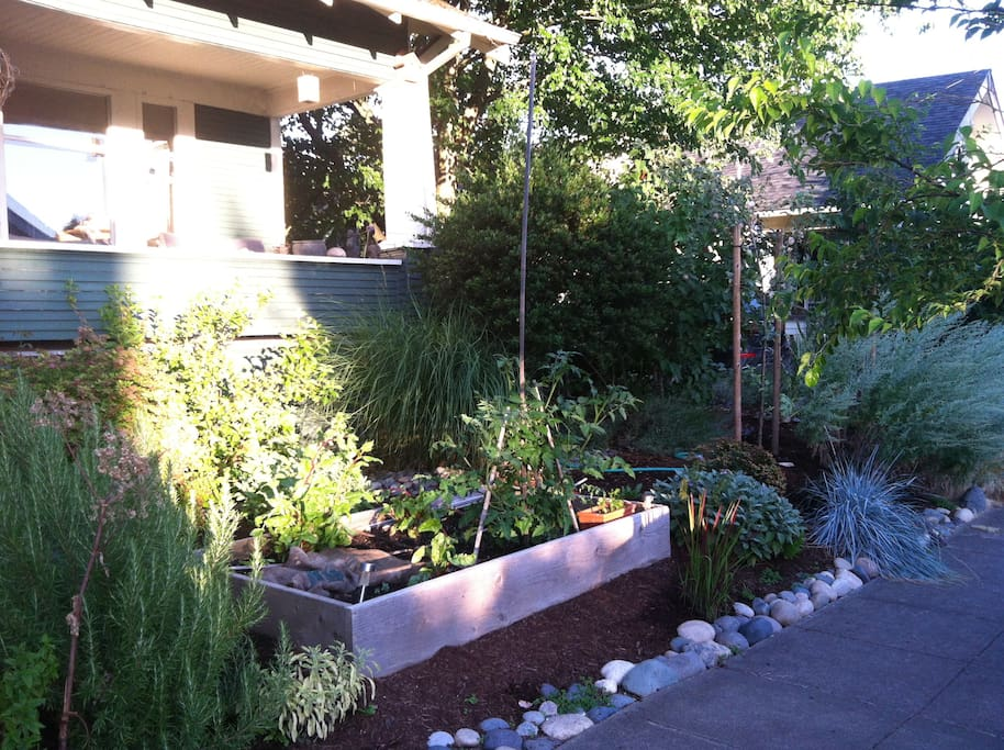 organic vege and herb garden to harvest from