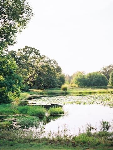 The ponds at Blackwood