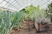 The high tunnels full of produce higher in nutritional value.