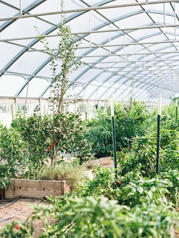 The high tunnels.