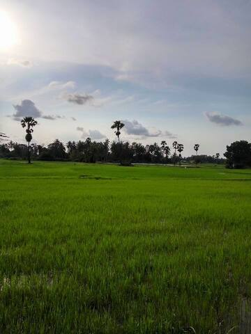 view  - paddy field