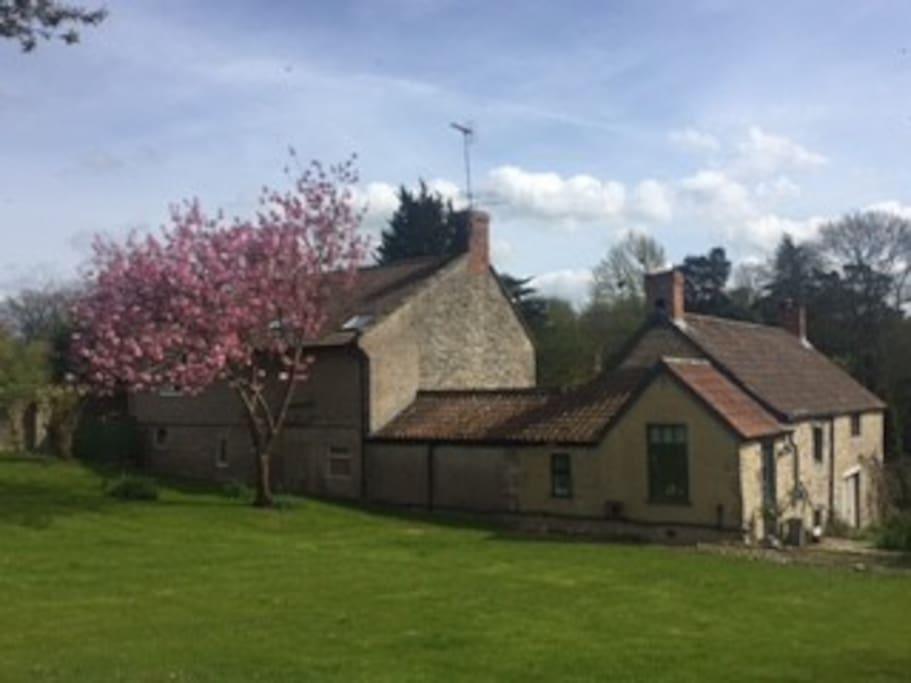 Cedar Cottage Rear Garden