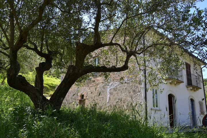 Sleeping between the olive trees in Abruzzo