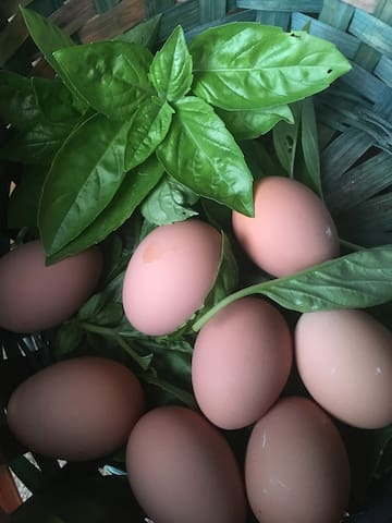 Fresh Eggs and produce. Let us know if you need anything!