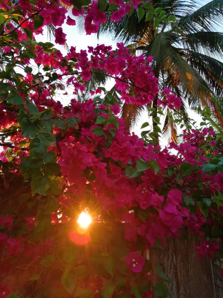 Mahali Pazuri Garden room  next to the ocean