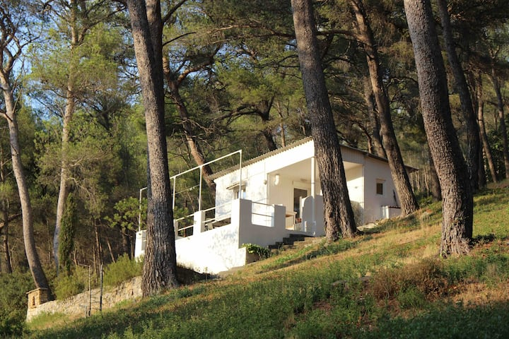 Lovely cottage among the pines & close to the sea