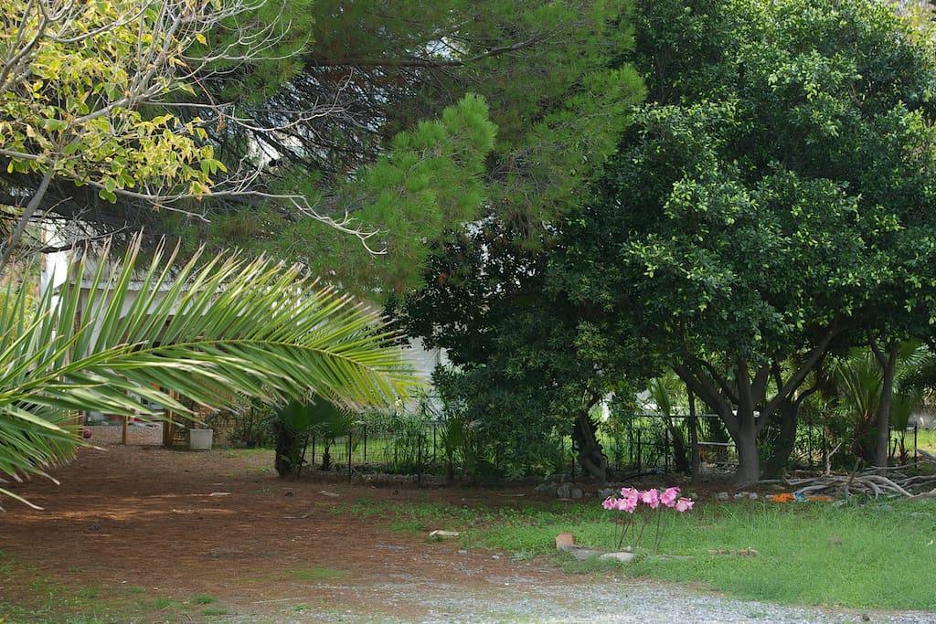 Un angolo del parco con i laghetti. A corner of the park with ponds.