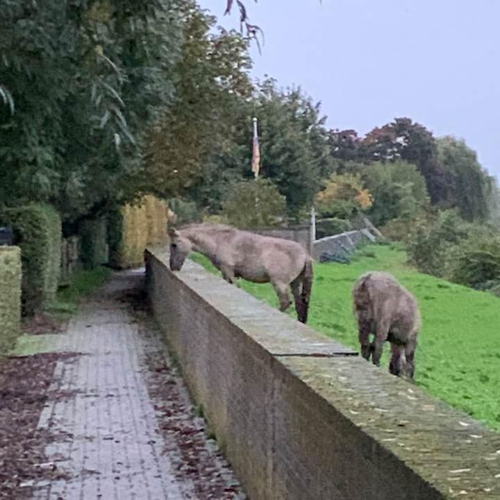 Natuur en stad (Maastricht) binnen handbereik.