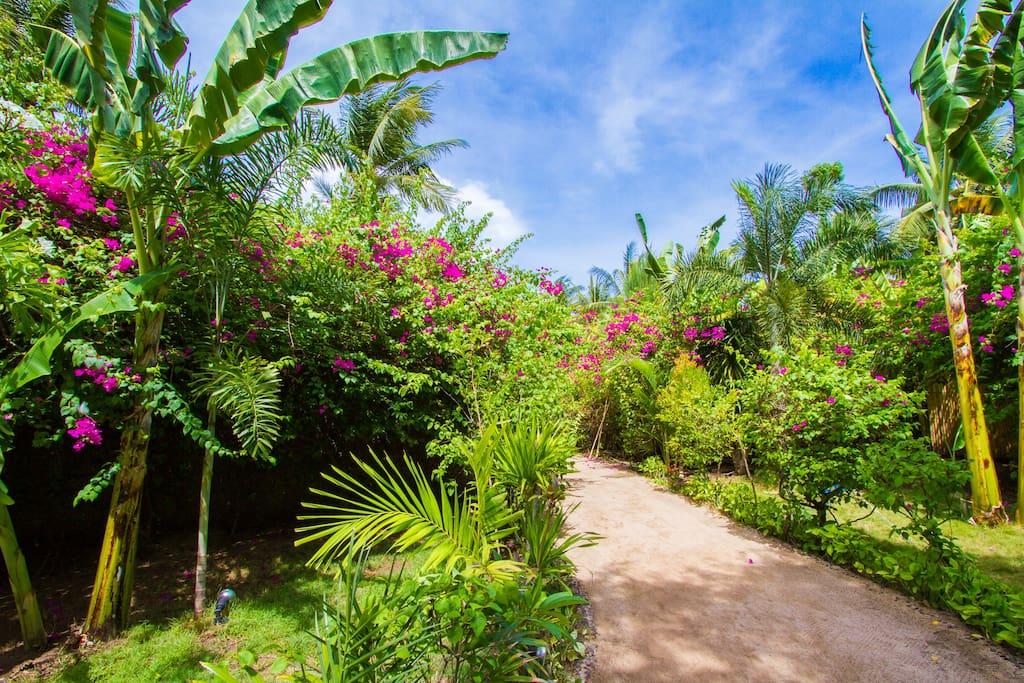 Environnement tropical