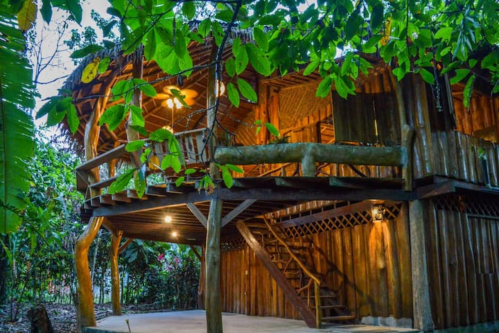 All wooden house is surrounded by colorful jungle plant life