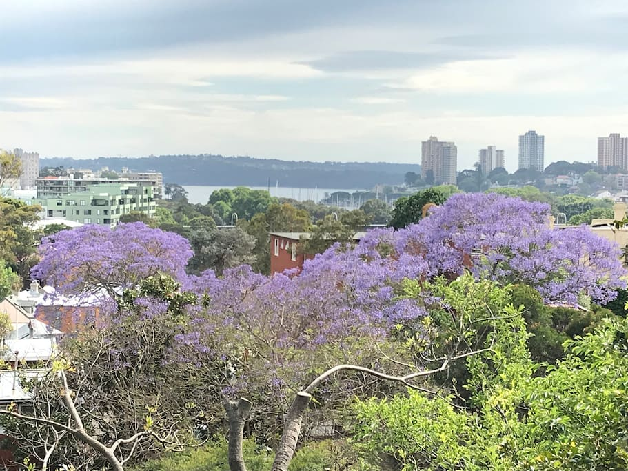 Sydney harbour..a short 5-10min walk away