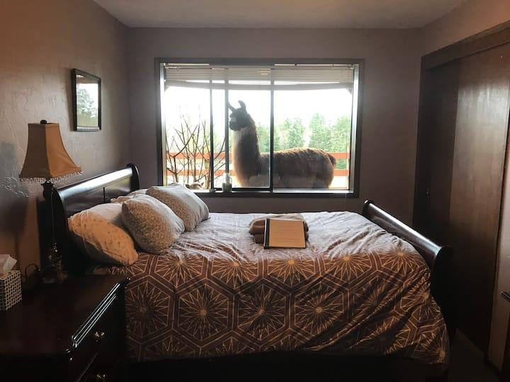 Comfy Llama Room at Arcadia Farm