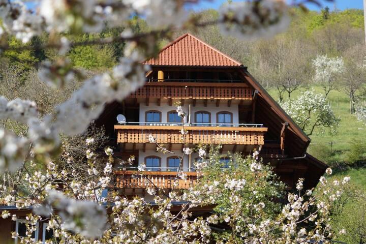 Ferienparadies Faißt, (Bad Peterstal-Griesbach), Ehrenmättlehof: Ferienwohnung E08, 30qm, 1 Wohn-/Schlafbereich, max. 2 Personen