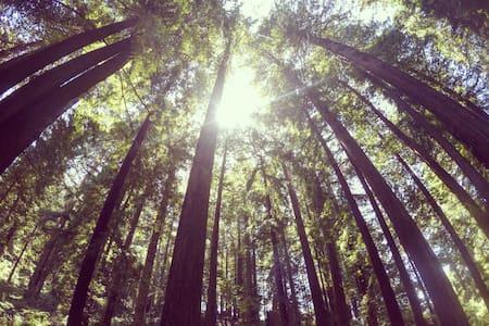 Beautiful 2 Bed Apt w/Deck, Redwood Forest & Bay - 阿克塔(Arcata) - 公寓