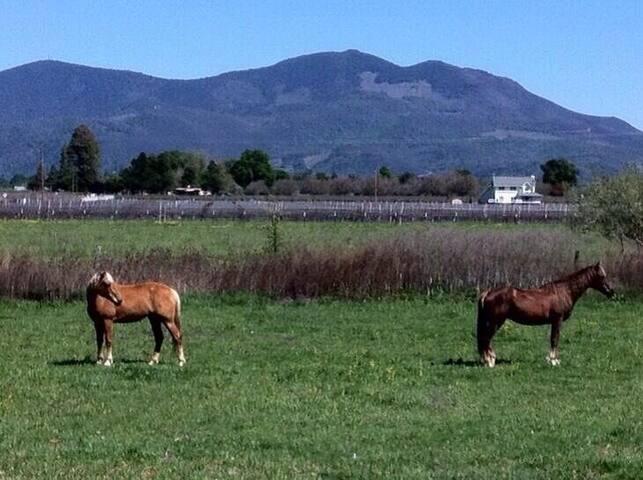 Horses grazing...