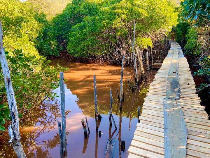 Beach front , monkeys mangrove