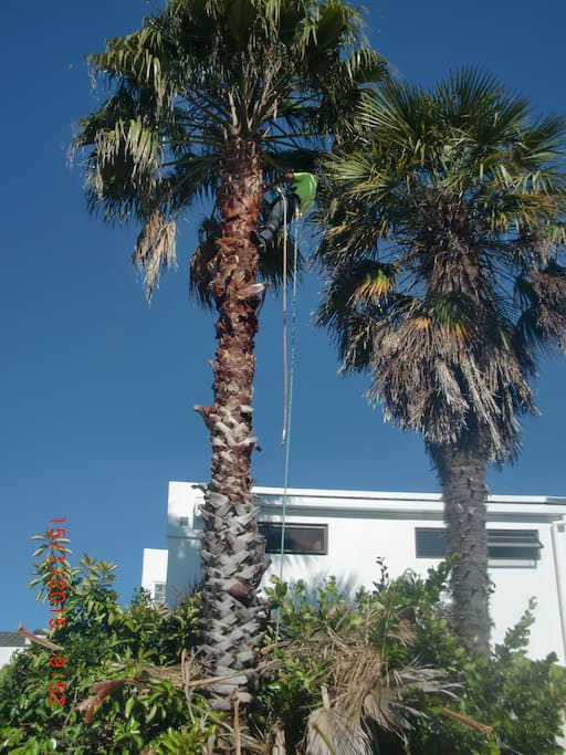 Front view of house with palms. Off street parking here.