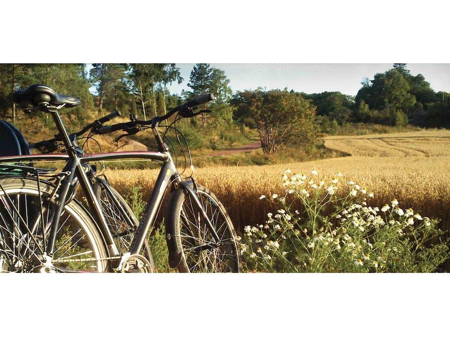 Stugan har cyklar till uthyrning.