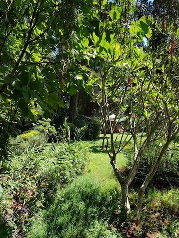 Hibiscus Garden House