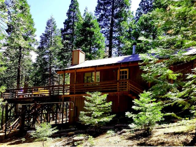 Big Trees Deck. Perfect High Sierra Gateway Cabin!