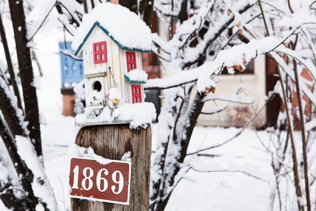 Address and Driveway Bird house